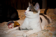 В дар! Красивые котята ждут вас!